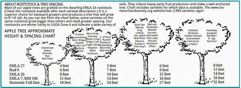 fruit tree spacing chart tree spacing trees forum at permies