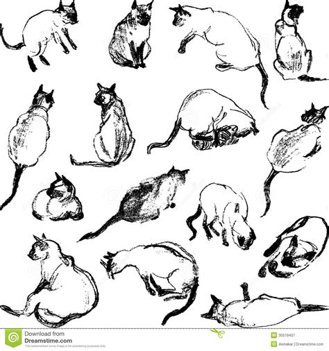 draw vector sketches cat royalty free stock photography image 30519407