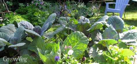 How To Build Raised Beds For Your Vegetable Garden How To Create A Vegetable Garden