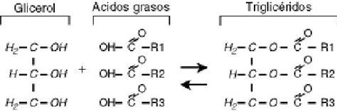 cadenas carbonadas longitud departamento de producci 211 n animal uco
