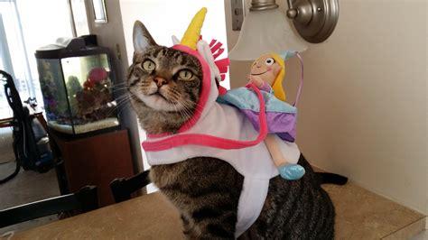 imagenes de gatos unicornios gatos vestidos de unicornio
