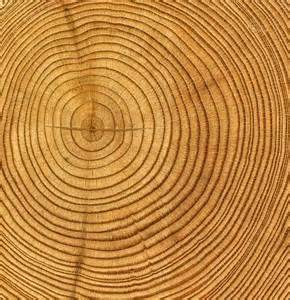Tree can tell it s own story each years there is a ring each ring