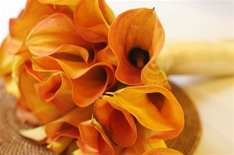 mango calla lilies by moonberry on deviantart