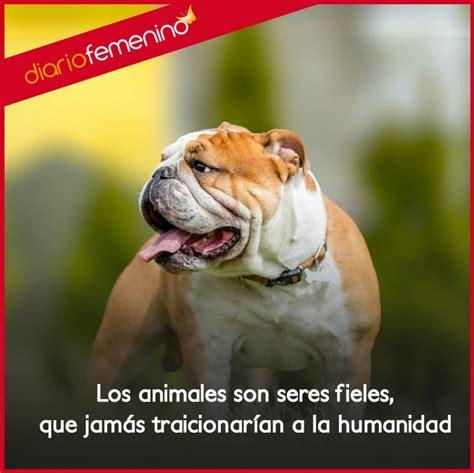 imagenes y frases de amor y respeto frases de amor y respeto para los animales