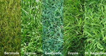 different types different zoysia grass types