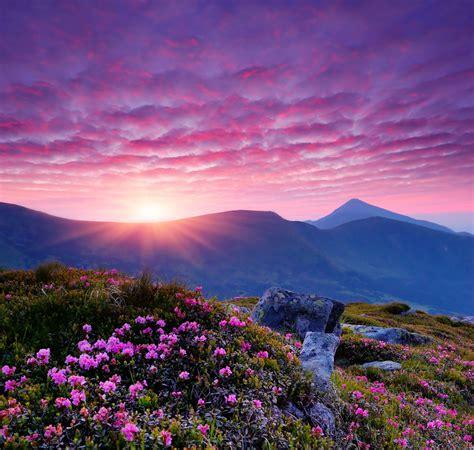 大自然美丽花风景分享 大自然美丽花风景图片下载