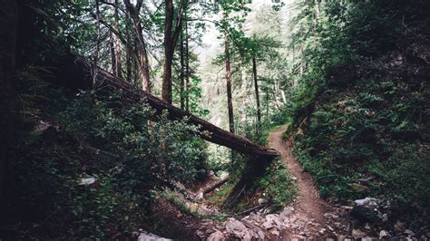hike themes hd forest trail download hd wallpapers