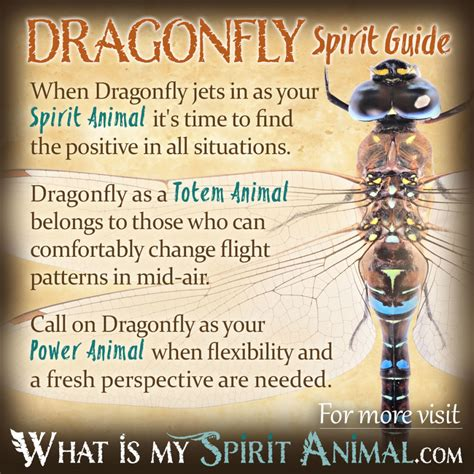 symbolizes meaning dragonfly symbolism meaning spirit totem power animal