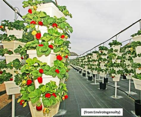 the farm of the future will grow plants vertically and hydroponically greentech media