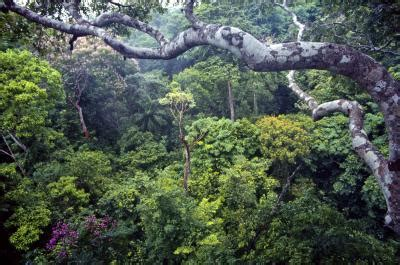 princeton one stop housing tropical forest carbon absorption may hinge on an odd couple eurekalert science news