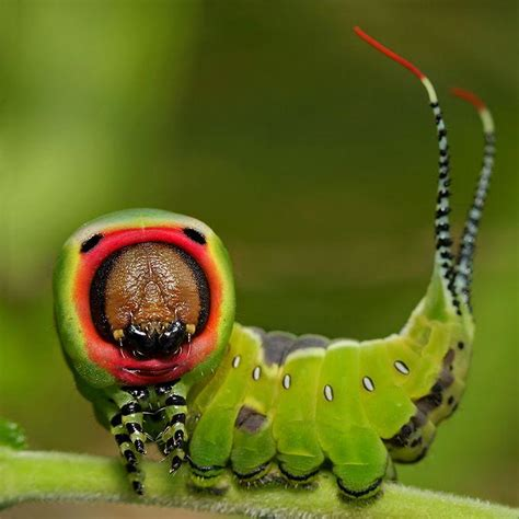 Amazing Beetles amazing up photos of insects