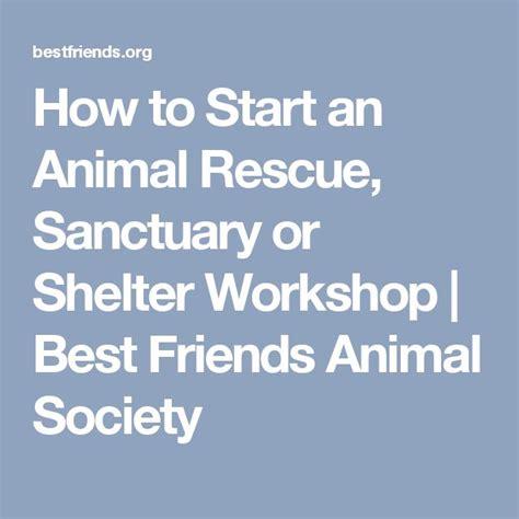how to start a rescue 25 b 228 sta djurr 228 ddning id 233 erna p 229 r 228 ddningshundar hundar i hundhem