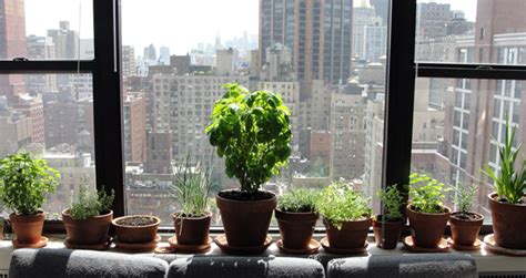 Outdoor Window Sill Plants Moving Outdoor Gardens Indoors For Winter Gardens