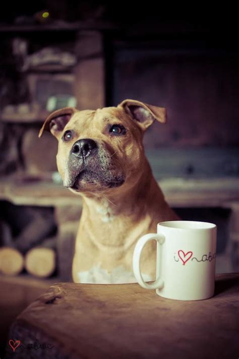 can dogs drink coffee 1000 images about dogs and coffee on u want coffee and pug