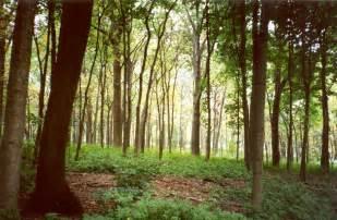 woodland trees woodland hd wallpapers widescreen desktop backgrounds