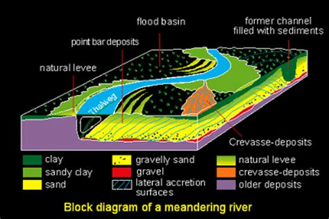 meandering river diagram castle rock rainforest how fossils leaves are recovered