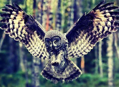 Charm Logam Model Burung Hantu foto burung hantu yang indah