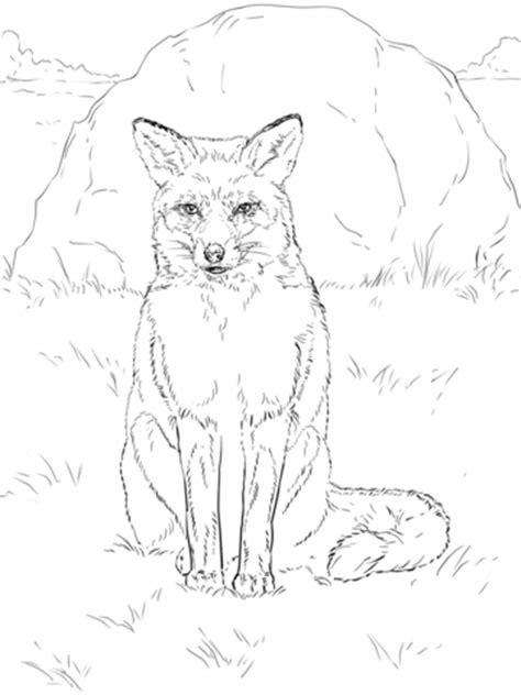 coloring page of a red fox ausmalbild sitzender rotfuchs ausmalbilder kostenlos