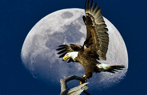 google images eagle eagle animals google search eagle falcon pinterest