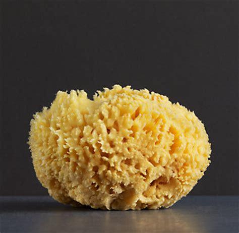 Free Catalog Request Home Decor natural sea sponge
