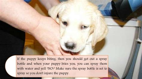 how to a not to bite when how to a puppy not to bite taunton