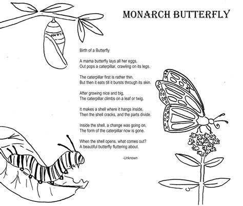 themes of short story metamorphosis monarch butterfly coloring poem home school ideas