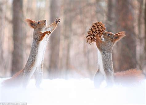 Komik Second Winters photographer vadim trunov captures squirrel diving to