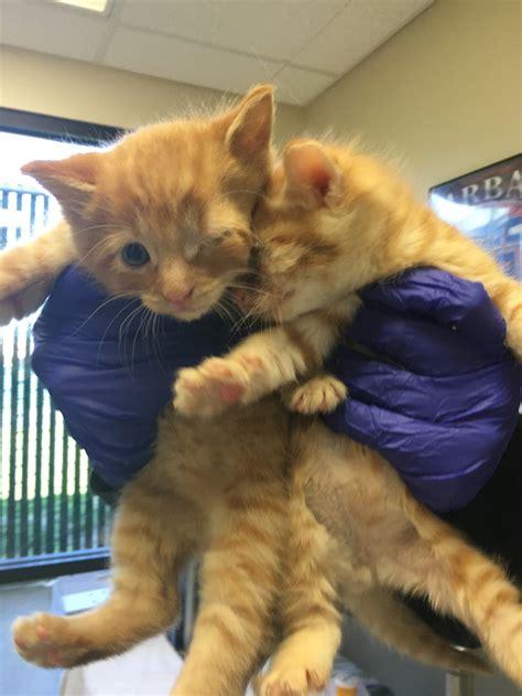 sacramento spca dogs rescue donates blood so kitten can see again