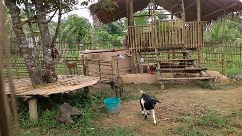 goat housing design goat house plans philippines escortsea