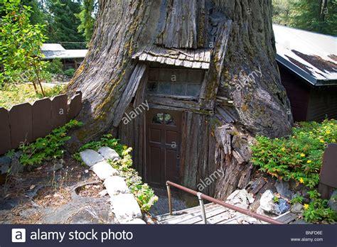 tree inside house tree house inside treehouse tree house inside u