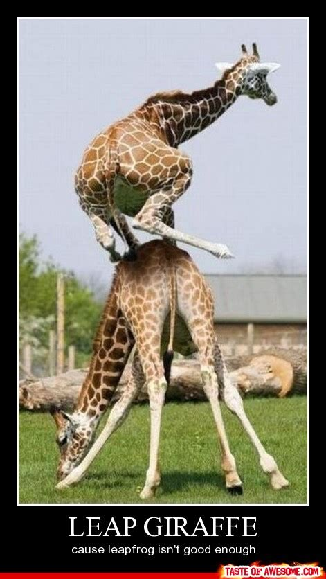 Funny Giraffe Memes - leap giraffe brooklyn moore you and scott s relationship is full of giaffes things i just