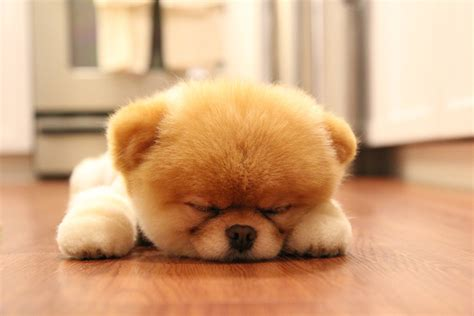when do puppies start sleeping through the the struggle is real what i ve learned from being a time student and two