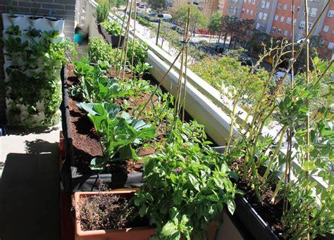 orto su terrazzo orto sul balcone cosa piantare orto in balcone cosa