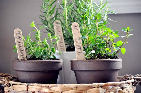 indoor herb garden  glass jar