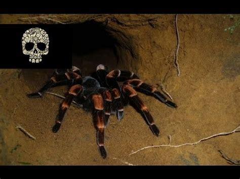 imagenes horrorosas reales las 10 ara 209 as m 193 s venenosas del mundo youtube