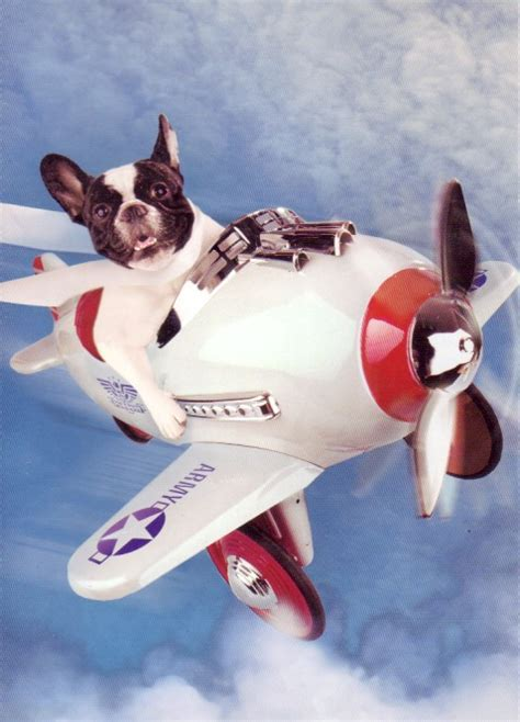 flying puppies everything you need to about flying with your barkpost