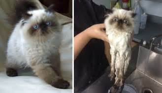 15 hilarious animals before and after a bath bored panda