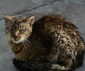 average life expectancy for cats how long do domestic