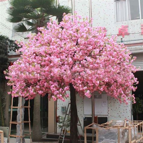 cherry blossom tree l 10 pcs japanese cherry blossoms seeds courtyard garden
