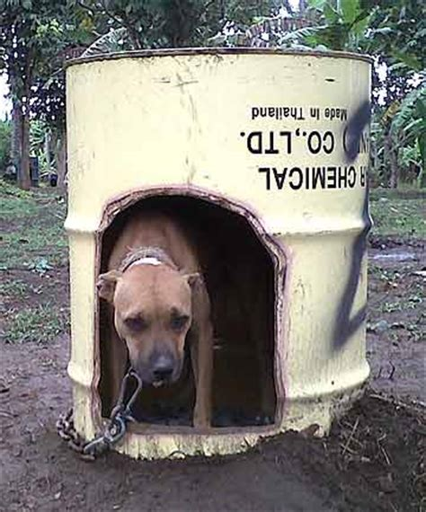 dog house philippines rescued pit bulls in dog fights put down stuff co nz