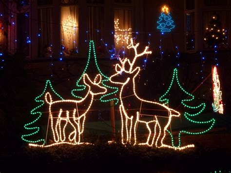 funny christmas treelights with deer deer pictures photos and images for and