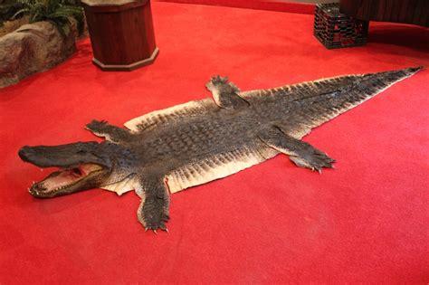 alligator rug alligator rug roselawnlutheran