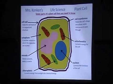 plant cell diagram for 5th grade 5th grade animal and plant cells