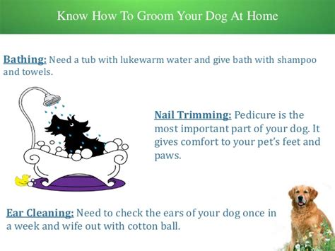 how to groom your how to groom your pet at home