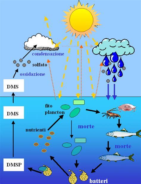 catena alimentare mare c la catena alimentare marina