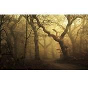 Mist Landscape Morning Nature Forest Path Leaves