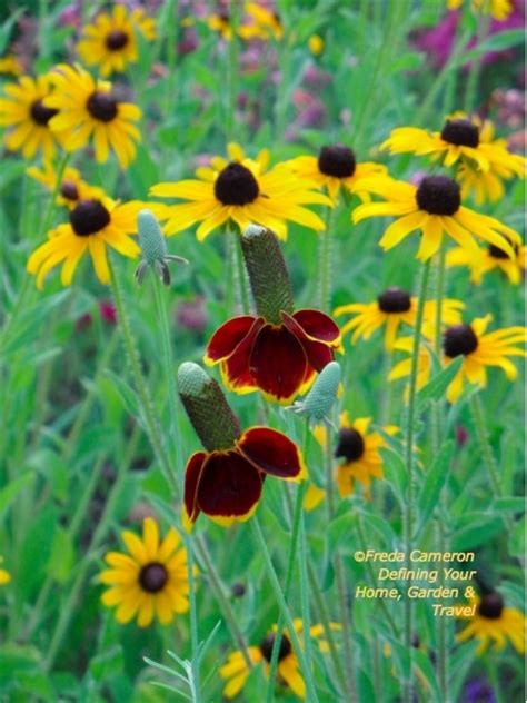 notes from the meadow user friendly deer resistant plant 35 best english country garden images on pinterest
