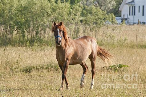 Breed Next Door 30 best caballos horses images on horses