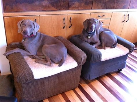 diy dog sofa 25 diy pet bed ideas