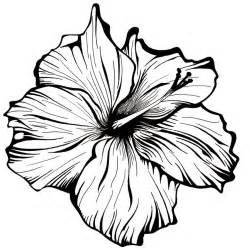 white flower by robcrichton on deviantart